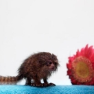 thumbs animaux droles 0003 Animaux drôles Du Jour (76 photos)