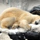 thumbs animaux droles 0020 Animaux drôles Du Jour (76 photos)