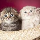 thumbs animaux droles 0032 Animaux drôles Du Jour (76 photos)
