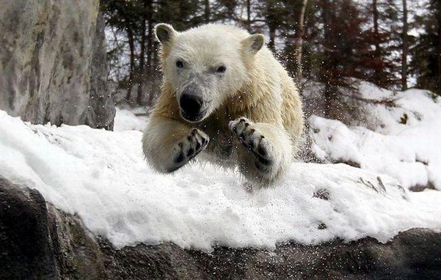 animaux droles du jour 5001 Animaux Droles du Jour (43 photos)