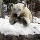 thumbs animaux droles du jour 5001 Animaux Droles du Jour (43 photos)