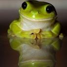 thumbs animaux droles du jour 5002 Animaux Droles du Jour (43 photos)