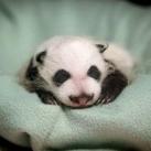thumbs animaux droles du jour 5003 Animaux Droles du Jour (43 photos)