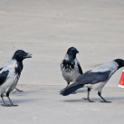 thumbs animaux droles du jour 5009 Animaux Droles du Jour (43 photos)