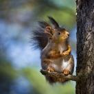 thumbs animaux droles du jour 5010 Animaux Droles du Jour (43 photos)