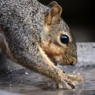 thumbs animaux droles du jour 5015 Animaux Droles du Jour (43 photos)