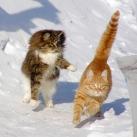 thumbs animaux droles du jour 5018 Animaux Droles du Jour (43 photos)