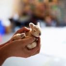 thumbs animaux droles du jour 5030 Animaux Droles du Jour (43 photos)