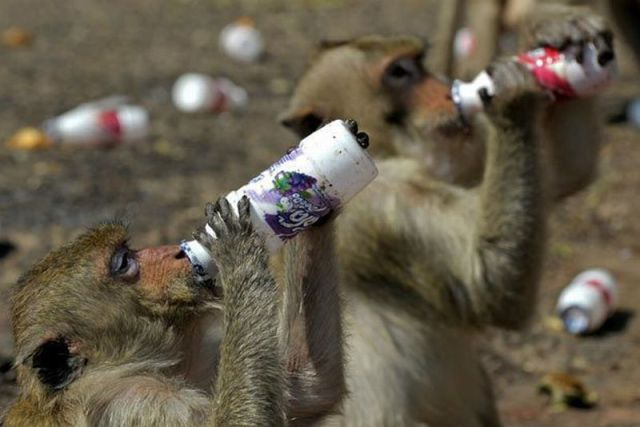 animaux droles du jour 2000 Animaux Droles du Jour (41 photos)
