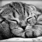 thumbs animaux droles du jour 2016 Animaux Droles du Jour (41 photos)