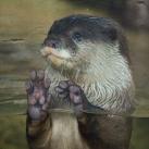 thumbs animaux droles du jour 2026 Animaux Droles du Jour (41 photos)