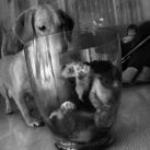 thumbs animaux droles du jour 2027 Animaux Droles du Jour (41 photos)