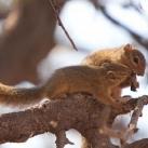 thumbs animaux droles du jour 2032 Animaux Droles du Jour (41 photos)