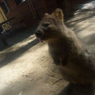thumbs animaux droles du jour 2038 Animaux Droles du Jour (41 photos)