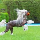 thumbs animaux fun 1012 Animaux Fun Du Jour =) (84 photos)