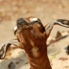 thumbs animaux fun 1025 Animaux Fun Du Jour =) (84 photos)