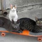 thumbs animaux fun 1035 Animaux Fun Du Jour =) (84 photos)
