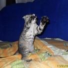 thumbs animaux fun 1037 Animaux Fun Du Jour =) (84 photos)