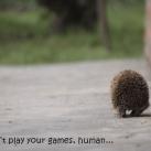 thumbs animaux funny du jour 016 Animaux fun du Jour =) (47 photos)