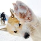 thumbs animaux funny du jour 026 Animaux fun du Jour =) (47 photos)