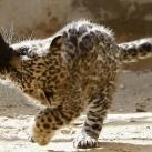 thumbs animaux funny du jour 029 Animaux fun du Jour =) (47 photos)