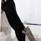 thumbs animaux funny du jour 031 Animaux fun du Jour =) (47 photos)