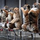 thumbs animaux funny du jour 032 Animaux fun du Jour =) (47 photos)