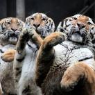 thumbs animaux funny du jour 033 Animaux fun du Jour =) (47 photos)