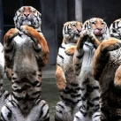 thumbs animaux funny du jour 045 Animaux fun du Jour =) (47 photos)