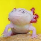 thumbs animaux funny du jour 046 Animaux fun du Jour =) (47 photos)