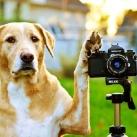thumbs animaux fun d043 Animaux fun Du jour (56 photos)