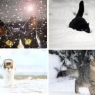thumbs animaux fun d049 Animaux fun Du jour (56 photos)