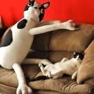 thumbs animaux fun 3 10 2011 022 Animaux Fun Du Jour (39 photos)