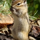 thumbs animaux funny 24 018 Animaux Fun du Jour =) (75 photos)