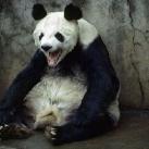 thumbs animaux funny 24 032 Animaux Fun du Jour =) (75 photos)