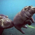 thumbs animaux funny 24 035 Animaux Fun du Jour =) (75 photos)