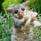thumbs animaux funny 24 036 Animaux Fun du Jour =) (75 photos)