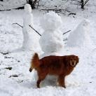 thumbs des bonhomme de neige 005 Des bonhommes de neige =D (33 photos)