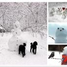 thumbs des bonhomme de neige 017 Des bonhommes de neige =D (33 photos)