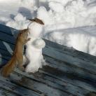 thumbs des bonhomme de neige 019 Des bonhommes de neige =D (33 photos)