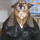 thumbs des chiens fun 002 Des Chiens Fun =D (110 photos)
