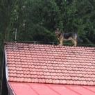 thumbs des chiens fun 006 Des Chiens Fun =D (110 photos)