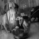 thumbs des chiens fun 008 Des Chiens Fun =D (110 photos)