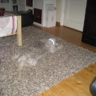 thumbs des chiens fun 010 Des Chiens Fun =D (110 photos)