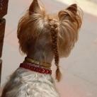thumbs des chiens fun 016 Des Chiens Fun =D (110 photos)