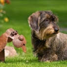 thumbs des chiens fun 018 Des Chiens Fun =D (110 photos)