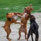thumbs des chiens fun 023 Des Chiens Fun =D (110 photos)