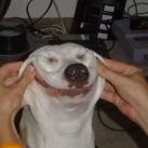 thumbs des chiens fun 025 Des Chiens Fun =D (110 photos)