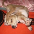 thumbs des chiens fun 026 Des Chiens Fun =D (110 photos)