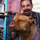 thumbs des chiens fun 027 Des Chiens Fun =D (110 photos)